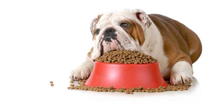 dog eating pellets