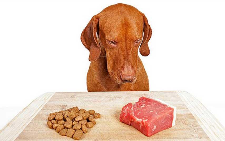 Raw or BARF Dog Food