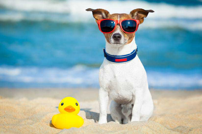 Keeping your dog cool during Summer